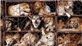 Bỏ ăn thịt chó: Chuyện có cơ sở để thành công