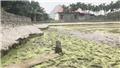 Sẽ khai quật khảo cổ khẩn cấp 13 cọc gỗ tại Thủy Nguyên, Hải Phòng tới hết tháng 3