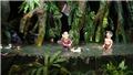 'Mekong show' - Một kết hợp lạ!