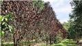Khu rừng cổ nhất tại Trung Quốc có niên đại hơn 371 triệu năm