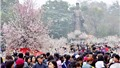 Lễ hội Hoa anh đào Nhật Bản lần thứ 5 tại Hà Nội với nhiều hoạt động thu hút du khách