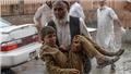 Đánh bom đền thờ Hồi giáo ở Afghanistan: Thương vong tăng mạnh