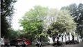 Không khí lạnh tràn về, Hà Nội và cả nước đều có mưa