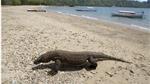Indonesia sẽ đóng cửa đảo rồng Komodo