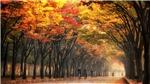 5 địa điểm ngắm lá vàng nổi tiểng bạn không thể bỏ lỡ tại Seoul