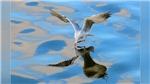 Văn hóa tuần này: sếu, hải âu 'bay ra' Hà Nội và màn 'chào sân' của Monsoon