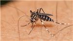 Cảnh báo dịch COVID-19 làm tăng nguy cơ các bệnh do muỗi gây ra