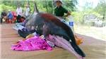 Xác cá voi nặng 1 tấn trôi dạt vào bờ biển Quảng Bình