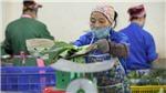 Bắc Giang phê duyệt hơn 300 tỷ đồng cho khuyến công giai đoạn 2021 - 2025