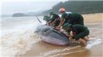 Hình ảnh cứu hộ cá voi nặng khoảng 3 tấn trên bờ biển Phú Lộc, Huế