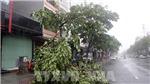 Áp thấp nhiệt đới sắp mạnh lên thành bão, cách bờ biển Khánh Hòa 500km