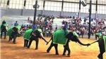 Thái Lan kêu gọi 'cứu' đàn voi trước dịch Covid-19