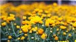 Rộn ràng sắc hoa Tây Tựu ngày cận Tết