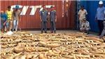 Campuchia thu giữ hơn 3,2 tấn ngà voi