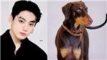 Jungkook BTS được ca ngợi hết lời vì nhân đạo với cún cưng