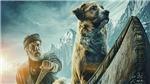 Những điểm khác biệt giữa nguyên tác văn học và phim điện ảnh 'Tiếng gọi nơi hoang dã'