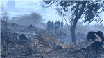 Kịp thời dập tắt vụ cháy rừng trên núi Sơn Trà, Đà Nẵng