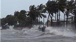 Dự báo thời tiết: Cả nước có mưa, Biển Đông hình thành vùng áp thấp mới