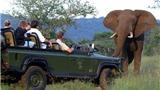 Tour Johannesburg - Cape Town: Nam Phi có gì lạ?