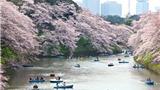 Chùm ảnh du lịch: Nhật Bản đẹp như tranh vẽ trong mùa hoa anh đào