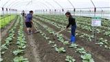 Những 'điểm sáng' nông thôn mới: 33% hợp tác xã nông nghiệp hoạt động hiệu quả