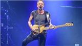 Ca khúc 'Shape Of My Heart': 'Hoa hồng đen' của Sting