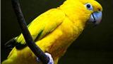 Truyện cười bốn phương: Bí kíp huấn luyện vẹt