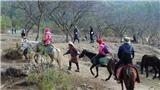 Sống chậm cuối tuần: Lần đầu cưỡi ngựa