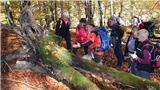 'Cụ' sồi trường thọ già đời nhất châu Âu từ thời Trung Cổ