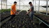 Giải mã công nghệ tạo giống lan rừng quý hiếm: Ứng dụng kỹ thuật chiếu xạ gây đột biến trên hoa lan