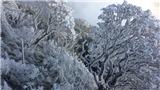 Băng tuyết phủ trắng Fansipan, dân phượt háo hức đổ bộ lên Sapa