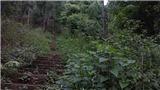 Thác Tác Tình, huyền thoại một tình yêu giữa rừng núi Lai Châu