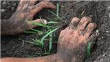VIDEO: Một mẫu đất tại Sóc Sơn nhiễm khuẩn Whitmore