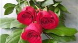Truyện cười: Hoa hạnh phúc