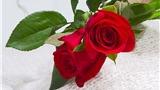 Truyện cười: Hoa đẹp cho người đẹp nhất trần gian