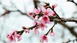 'Năm hết Tết đến' và 'Tết đến Xuân về'