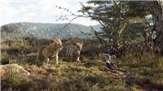'The Lion King' và màn tái ngộ live-action mãn nhãn sau 1/4 thế kỷ