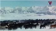 VIDEO: 10 nghìn con ngựa đen tung vó trong tuyết trắng mừng năm mới 2020