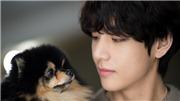 Phụ huynh V BTS bất đồng ý kiến chỉ vì... cún cưng