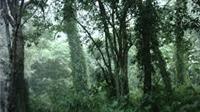 Tuyên Quang xử lý hơn 500 vụ vi phạm Luật Bảo vệ và phát triển rừng
