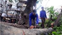 Chủ tịch Hà Nội yêu cầu rà soát việc chặt cây xanh trước 'tranh cãi' của dư luận