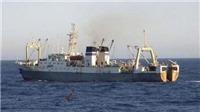Tàu Viễn Đông chìm khiến 54 người chết do thuyền trưởng muốn thử... cảm giác mạnh?