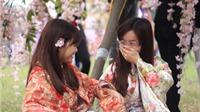 Không bẻ hoa, vặt cành trong ngày khai mạc Lễ hội Hoa Anh đào