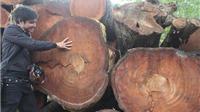 Xử lý cá nhân, tổ chức liên quan vụ 'cải tạo thay thế cây xanh' trước ngày 30/6