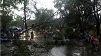 CHÙM ẢNH: Gió giật, mưa vùi, cây xanh Hà Nội gặp 'đại họa'