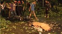 VIDEO: Mưa dông quật chết người, nhiều phương tiện giao thông 'nát xác' trên đường phố Hà Nội