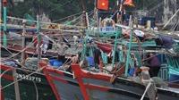 Cơn bão số 1: Đã có mưa dông tại các tỉnh Quảng Ninh, Nam Định