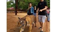 Wojciech Szczesny dắt hổ đi dạo ở Thái Lan