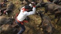 Không dễ ngăn nghi lễ hiến tế động vật lớn nhất Nepal
