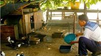 Hỗ trợ huyện đảo Trường Sa 10 tấn thóc để chăn nuôi gia cầm